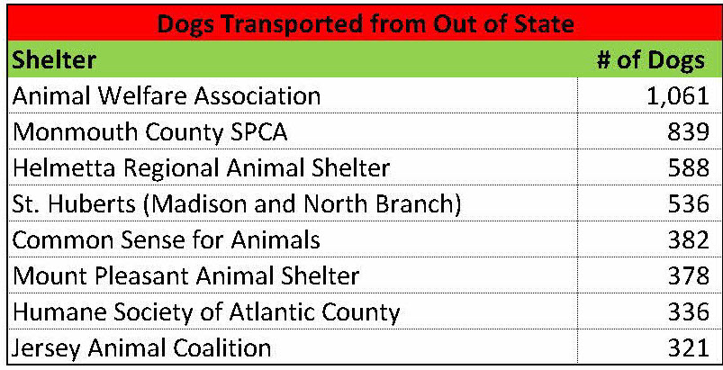 New Jersey Animal Shelter Statistics Are Far Worse Than
