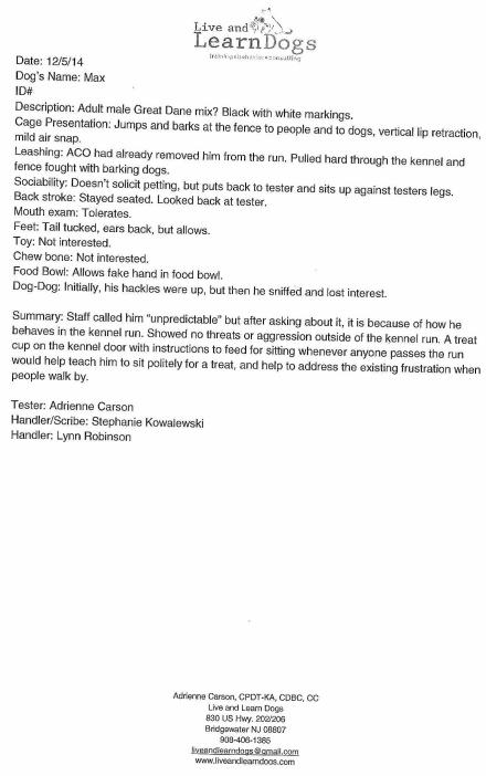 Helmetta Dog Max Killed Evaluation