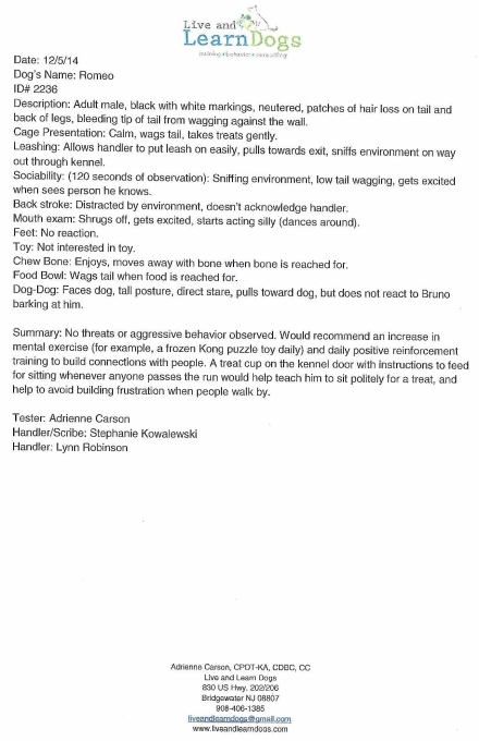 Helmetta Dog Romeo Killed Evaluation