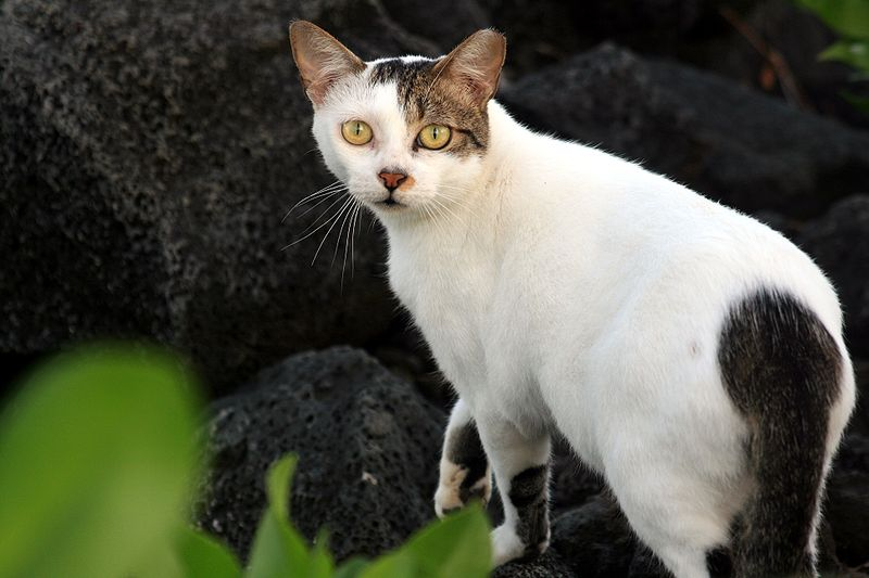 Photo courtesy of: http://commons.wikimedia.org/wiki/File:Feral_cat_1.JPG