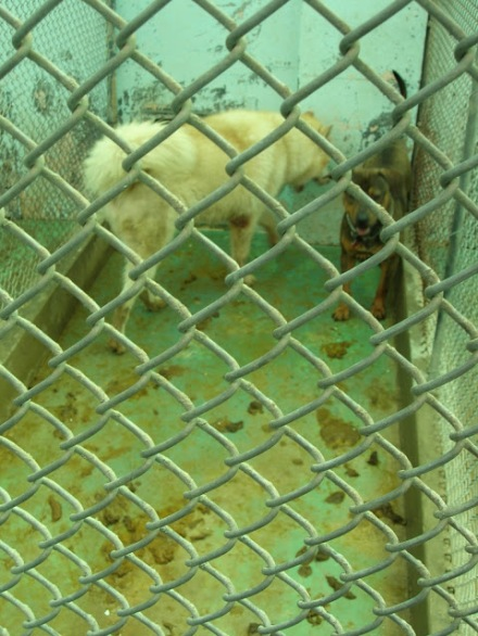 15 Dogs in dirty kennel