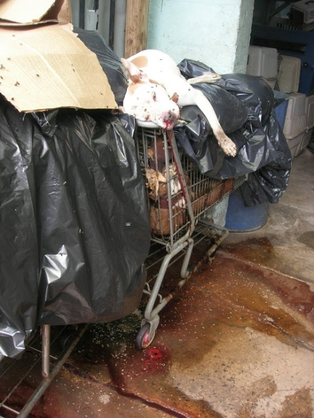 43 Dead Dogs in Shopping Carts. Blood. Maggots