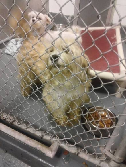 East Orange Shelter Photo 4
