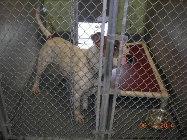 East Orange Animal Shelter Dog