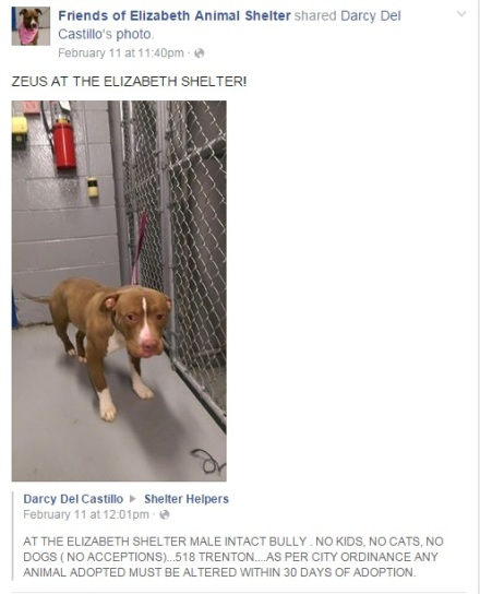 Elizabeth Animal Shelter Adoption Profile
