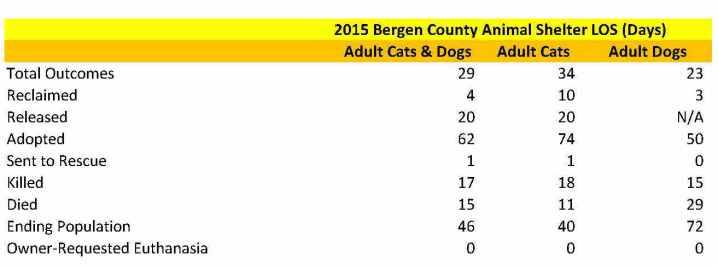 Bergen Adult Animals LOS