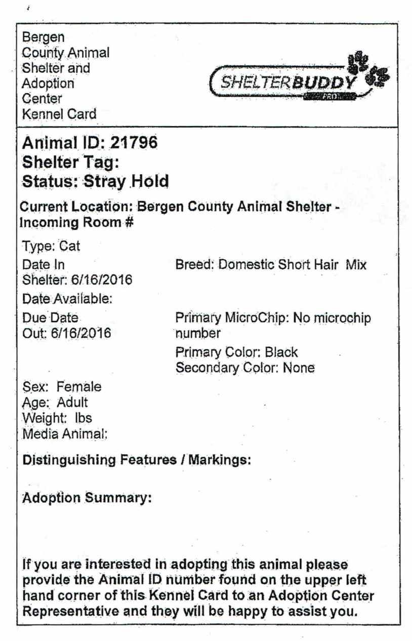 Bergen County Animal Shelter's TNR Program Saves Lives, But
