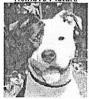 Dog ID 889 Pt 1.jpg