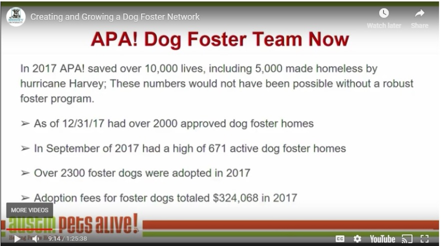 APA Dog Foster Program Size